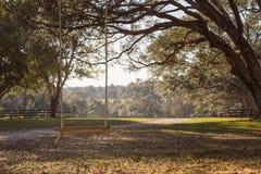 Schommeling het hangen van boomtak Stock Foto