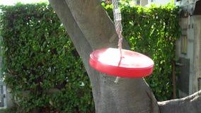 Schommeling in het ronde vorm rode gekleurde blazen in wind als zonreeksen stock video