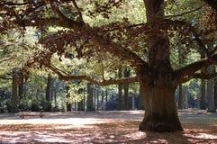 Schommeling op een boom Royalty-vrije Stock Afbeeldingen