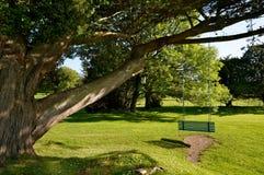Schommeling op een boom Ierland stock afbeeldingen