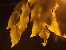 Schommelingsbladeren stock fotografie