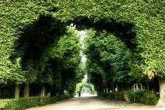Schonbrunn公园,维也纳 图库摄影