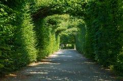 Schonbrunn庭院在维也纳 免版税库存照片