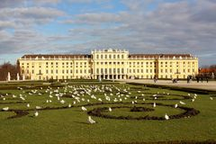 Schonbrunn castle in Wien, Austria. Seagulls at Schonbrunn castle in Wien, Austria Royalty Free Stock Image