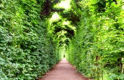 Schonbrunn garden, Vienna. Arch, decorated with plants in Schonbrunn garden, Vienna Stock Photos