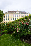 Schonbrunn Palace in Vienna. Beautiful rose garden in Schonbrunn Palace, Vienna Stock Photo