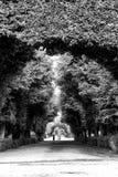 Schonbrunn park, Wiedeń Zdjęcie Stock