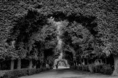 Schonbrunn parkerar, Wien fotografering för bildbyråer