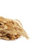 Schoof van tarweoren op witte achtergrond Stock Afbeeldingen