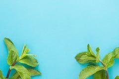 Schoof van vers muntblad op blauwe achtergrond Hoogste mening De ruimte van het exemplaar Stock Afbeelding