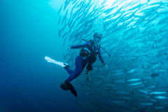 School of barracuda Stock Photos