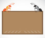 School blackboard with ant Royalty Free Stock Images
