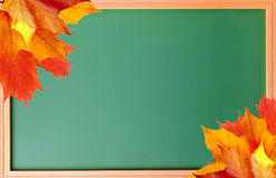 School blackboard and autumn maple leaves Royalty Free Stock Photography