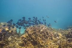 School of fish in a reef Royalty Free Stock Photo