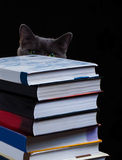 School books on desk, education concept, educate, technology, cat, splash Stock Photos