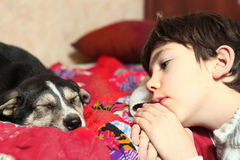 School boy and his  little puppy look to each other Royalty Free Stock Photos