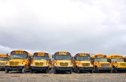 School Bus Lineup Royalty Free Stock Images