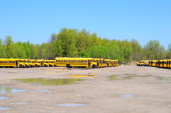 School bus roundup. IMage of a school bus roundup Royalty Free Stock Photos