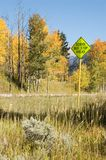 School Bus Zone Ahead. School bus warning sign near the top of McClure Pass, Colorado in late September Stock Photo