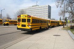 School Buses. A picture school buses parked along street Royalty Free Stock Image