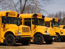 School Buses. Several school buses lined up Royalty Free Stock Image