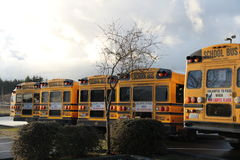 School buses from the back. A row of parked public school buses Stock Images