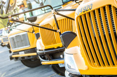 School buses lined up. Front grill of school buses lined up at the school ready to load children to take them home royalty free stock photos