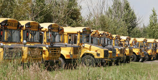 School buses parked  Royalty Free Stock Photos
