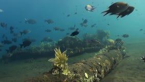 School of colorful fish swim along sandy bottom stock video footage