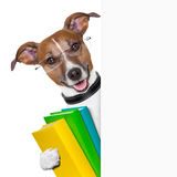 School dog banner. School dog with books and banner Stock Photo