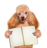 School dog with books Stock Images