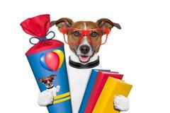 School dog Stock Photo