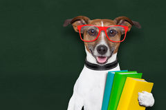 School dog Stock Photos