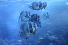 A School of Fish Royalty Free Stock Photography