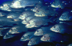 School of fish. In the open ocean stock images