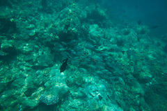 School of fish above coral reef Stock Photography