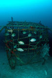 School of fish on artificial reef. Stock Photography