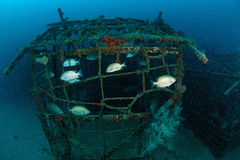 School of fish on artificial reef. Royalty Free Stock Photos