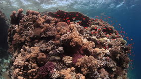 School of fish on background underwater landscape in Red sea. stock footage