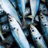 School Of Fish Caught Dead Freshness Concept Stock Photos