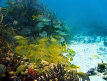 School of fish in the coral Stock Image