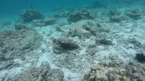 School of fish in coral stock footage