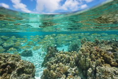 School of fish with corals and cloudy blue sky Stock Photography