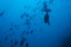 School of fish in deep ocean waters Royalty Free Stock Photos