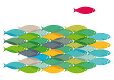 School of Fish Design. Tightly grouped school of fish with one single fish who stands out from the crowd in red Stock Photography
