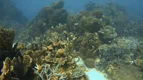 School of fish free near the corals. A shot of a school of fish near the corals stock video footage