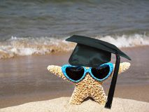 starfish graduate wearing sunglasses Royalty Free Stock Photos