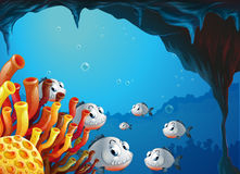 A school of fish inside the sea cave Stock Images