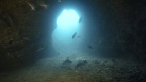 A school of fish inside a sea tunnel. A moving shot under a rock that created a narrow space making it like a tunnel has a school of fish swimming under stock video