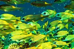 School of fish Stock Photography